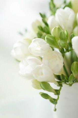 white-fresia